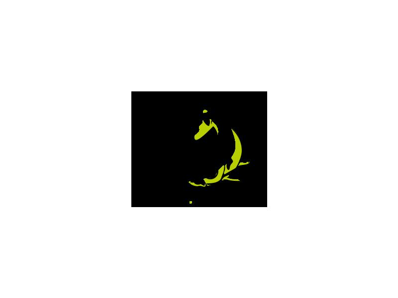 Koi srl